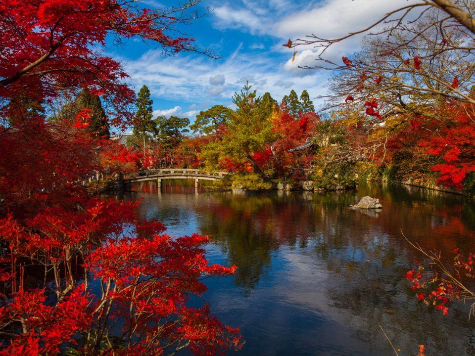 Intern in Japan - Spring in Tokyo